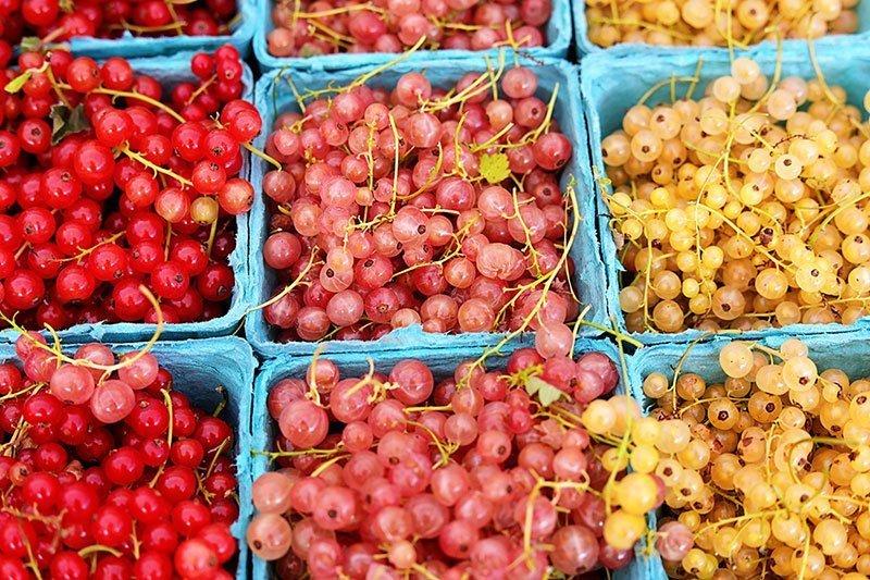 Washington-DC--Farmers-Markets--Dupont-Circle-Market