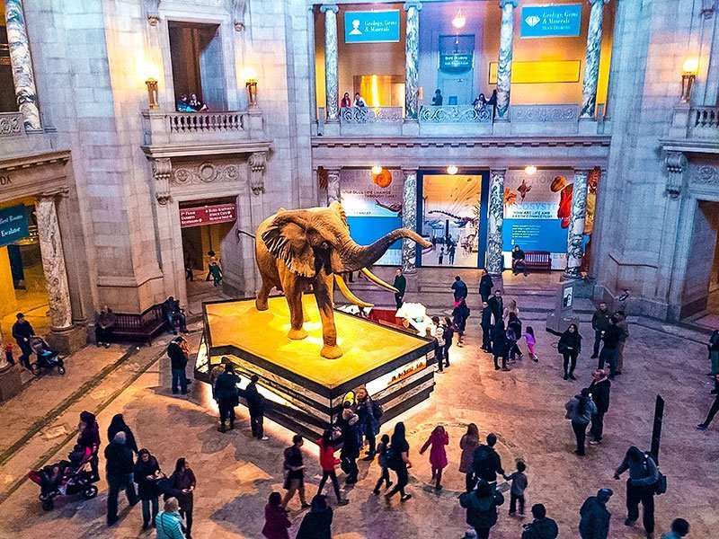 Washington-DC-Museums--Smithsonian-National-Museum-of-Natural-History