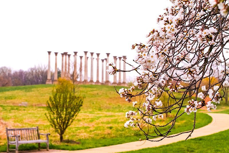 Washington-DC-United-States-National-Arboretum--Spring--Cherry-Blossoms