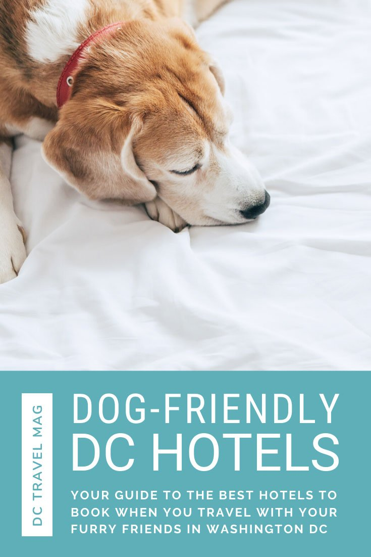 Pet-Friendly Hotels in Washington DC