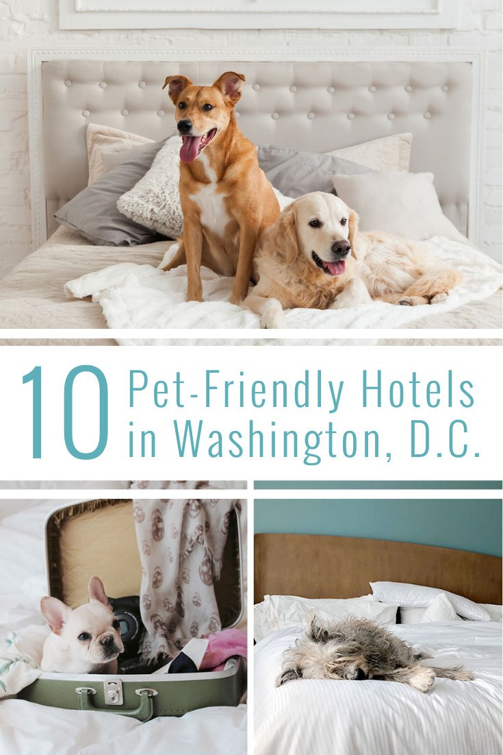 Pet-Friendly Washington DC Hotels