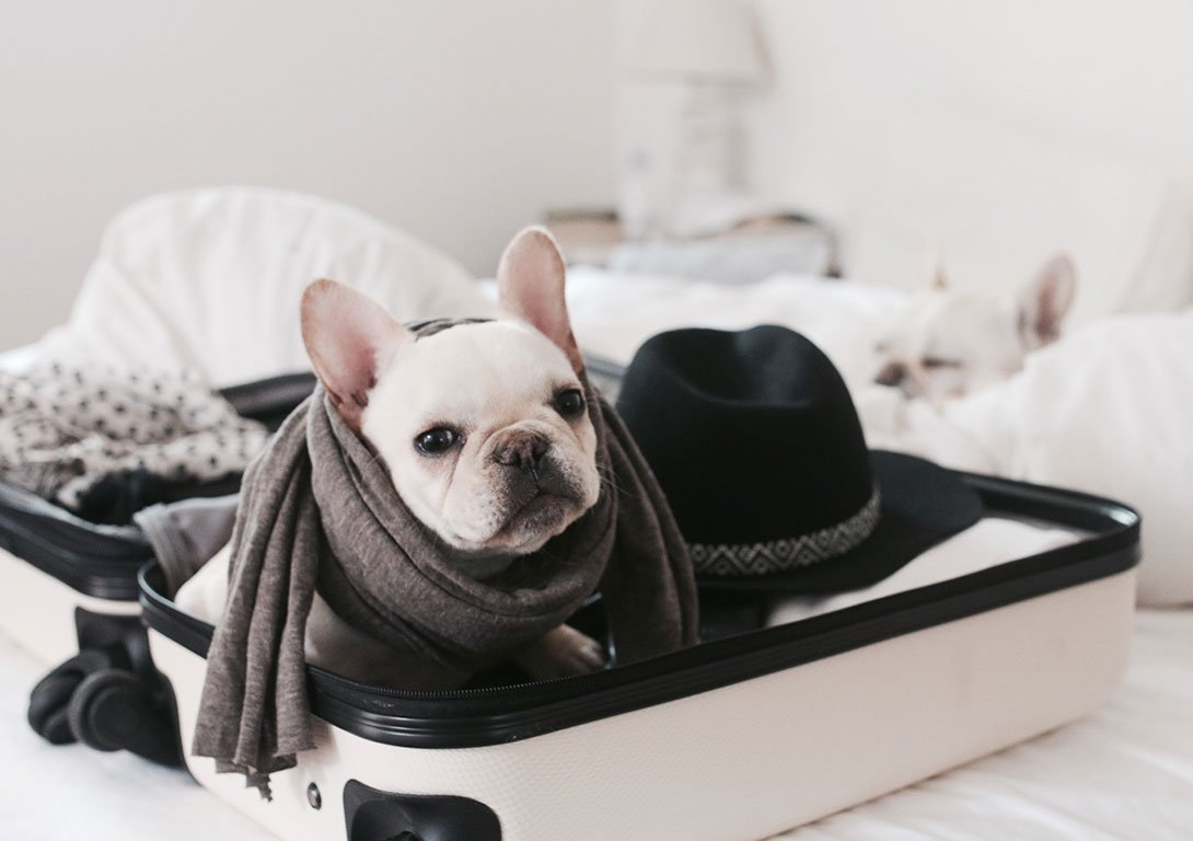 Pet-Friendly Hotels in Washington, D.C.