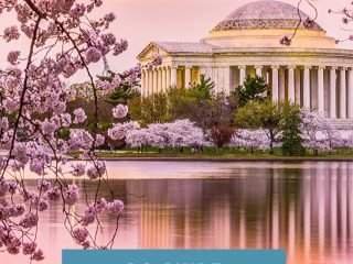 Washington DC Cherry Blossoms Tips
