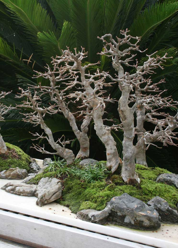 National Bonsai & Penjing Museum at the U.S. National Arboretum