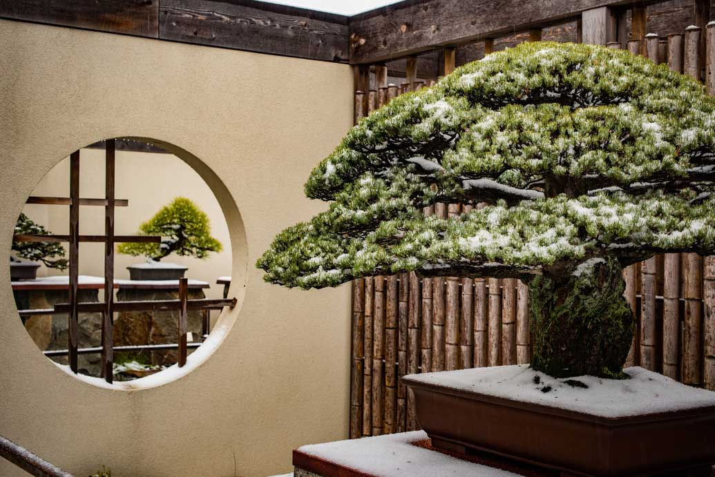 National Bonsai & Penjing Museum at the U.S. National Arboretum