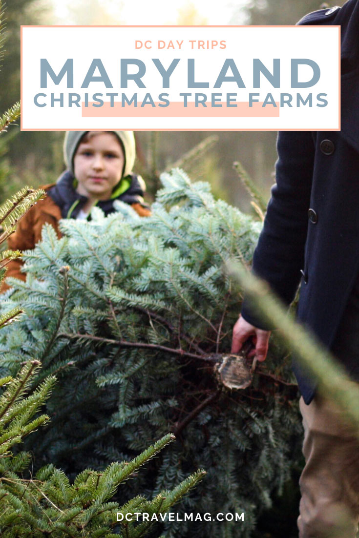 Christmas Tree Farms in Maryland