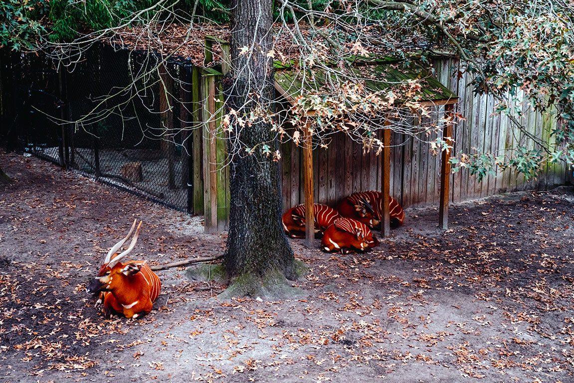 Things to do in Norfolk Virginia - Virginia Zoo