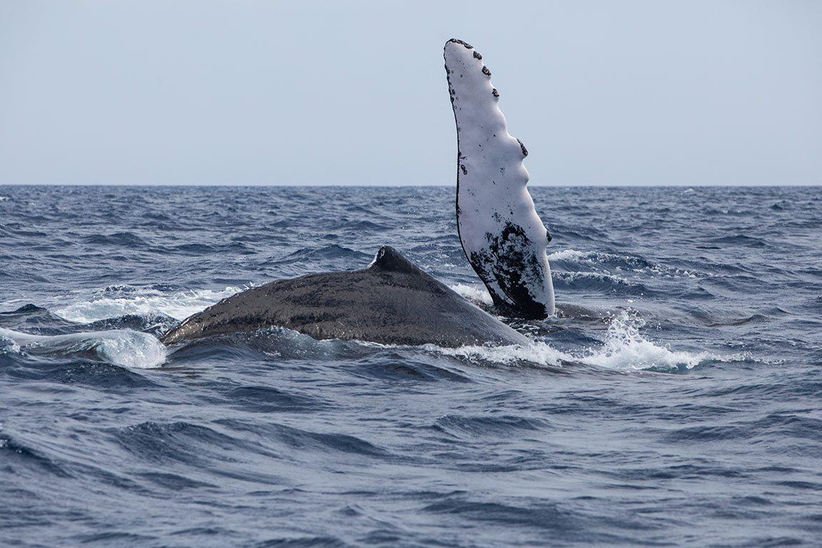East Coast Whale Watching