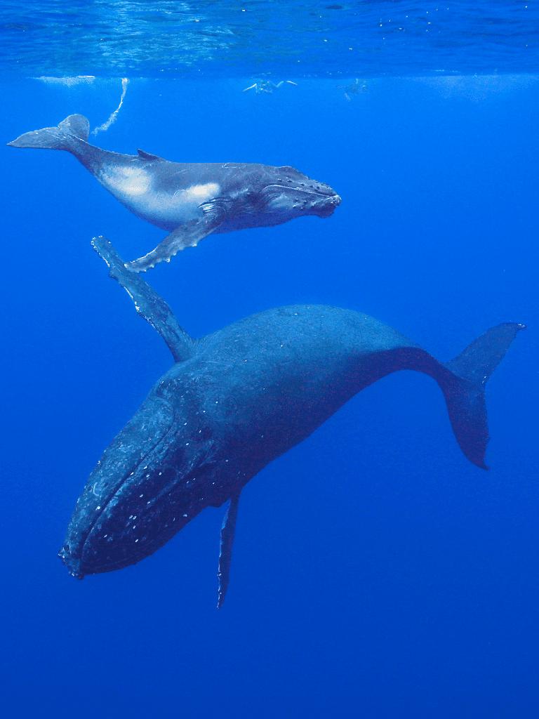 Virginia Beach Whale Watching