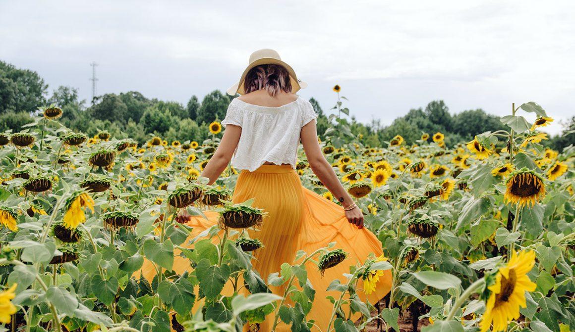 Sunflower Fields In Virginia