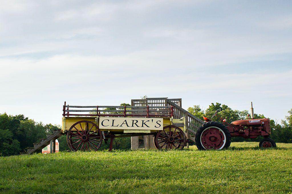 Sunflower Fields in Maryland - Clarks Elioak Farm