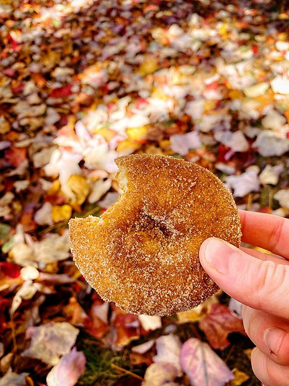 Apple Cider Donuts at Butler's Orchard in Germantown Maryland - Pumpkin Picking in Maryland