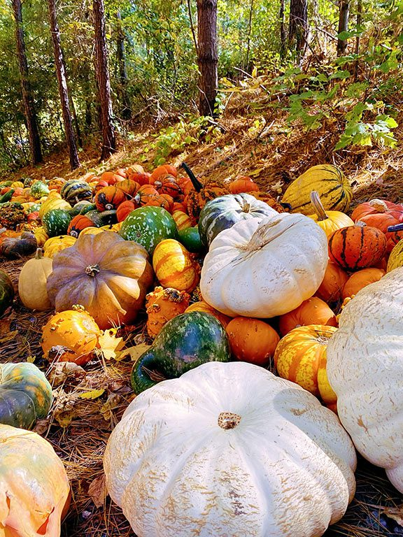 Butler's Orchard in Germantown Maryland - Pumpkin Picking in Maryland