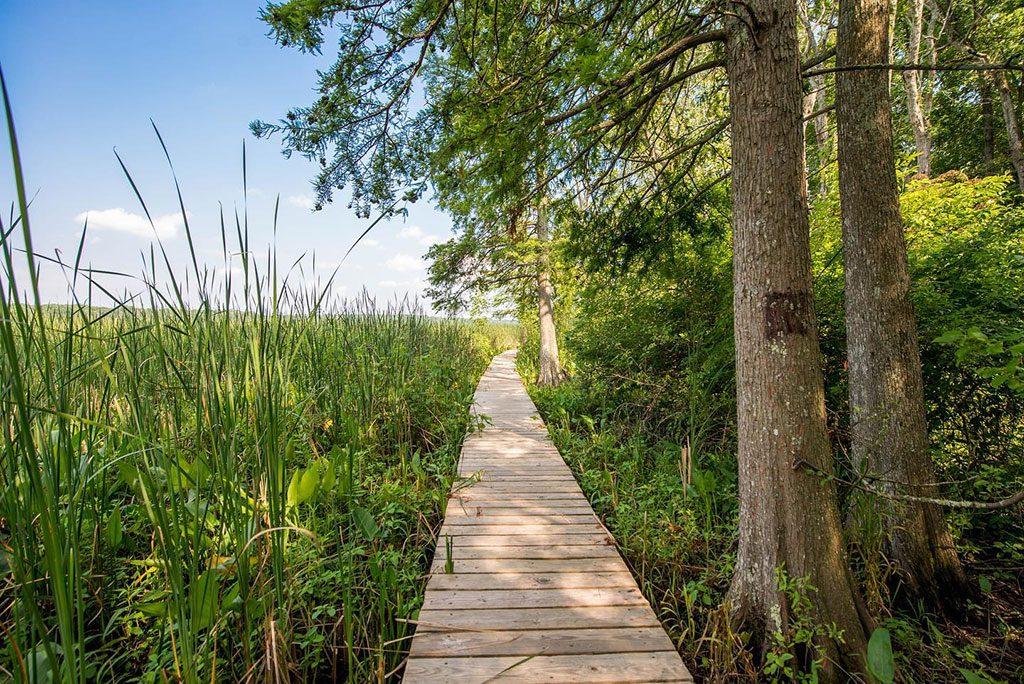 Maryland Parks Jug Bay Wetlands Sanctuary