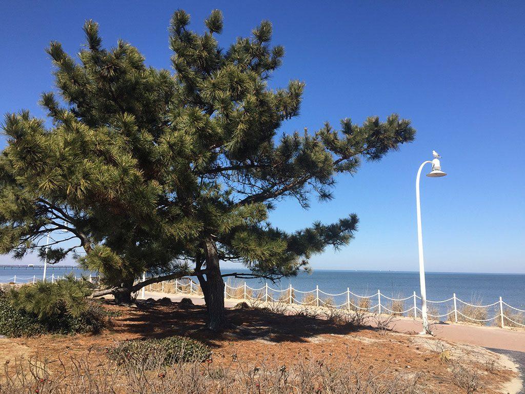 Norfolk Virginia Beaches - Ocean View Beach Park