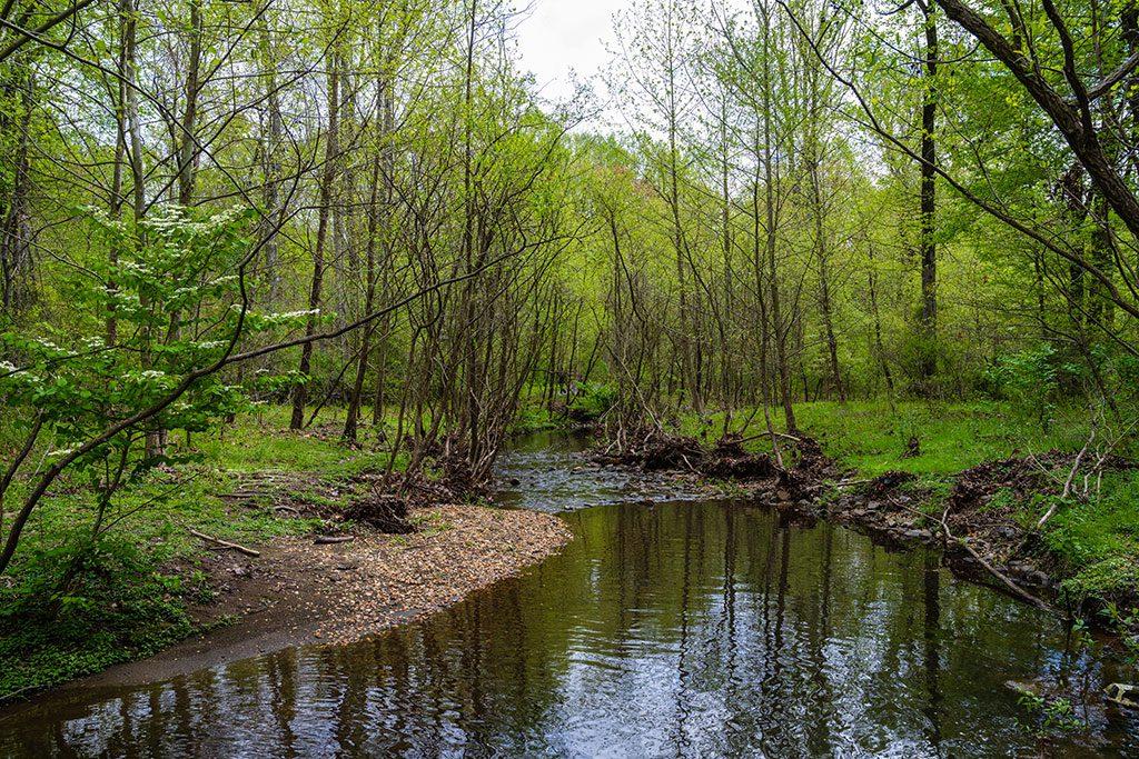 Hiking in Virginia- Walker Nature Center- Reston VA