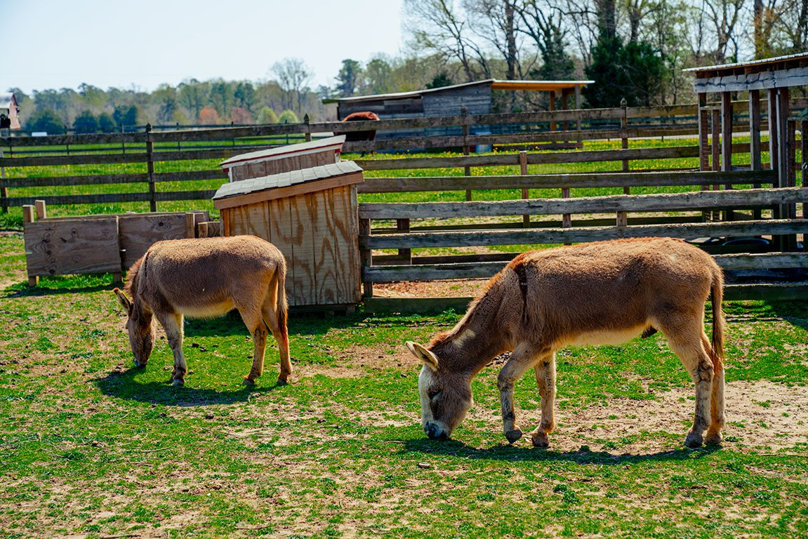 Surry VA- Chippokes Farm and Forestry Museum in Chippokes Plantation State Park
