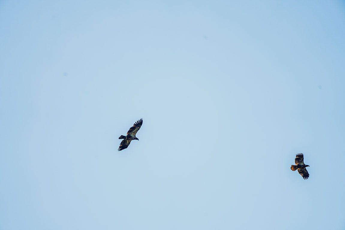 Surry Virginia- Hog Island Wildlife Management