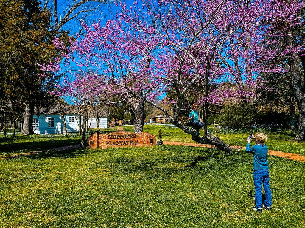 Surry VA- Chippokes Plantation State Park