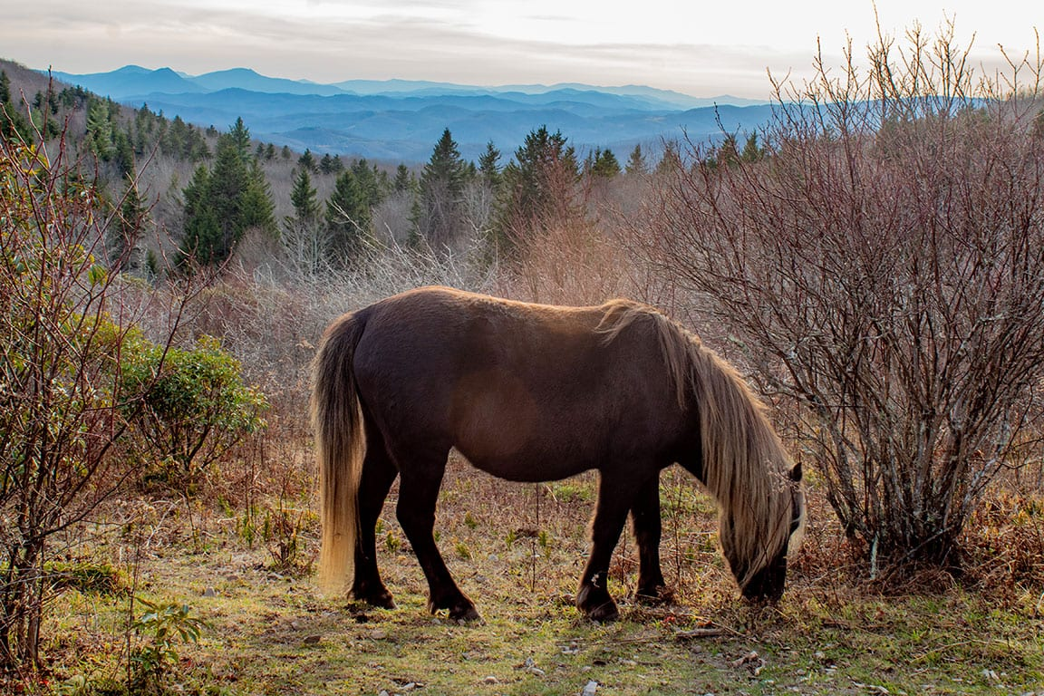 Grayson Highlands State Park in Virginia
