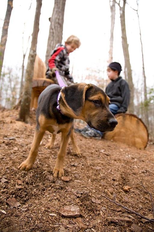 Richmond Virginia State Parks- Pocahontas State Park