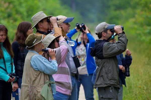 Birding at Great Dismal Swamp in Suffolk Virginia