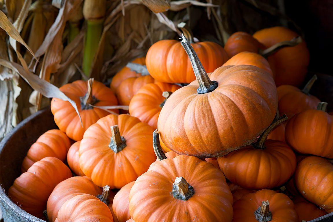 Baltimore Pumpkin Patch