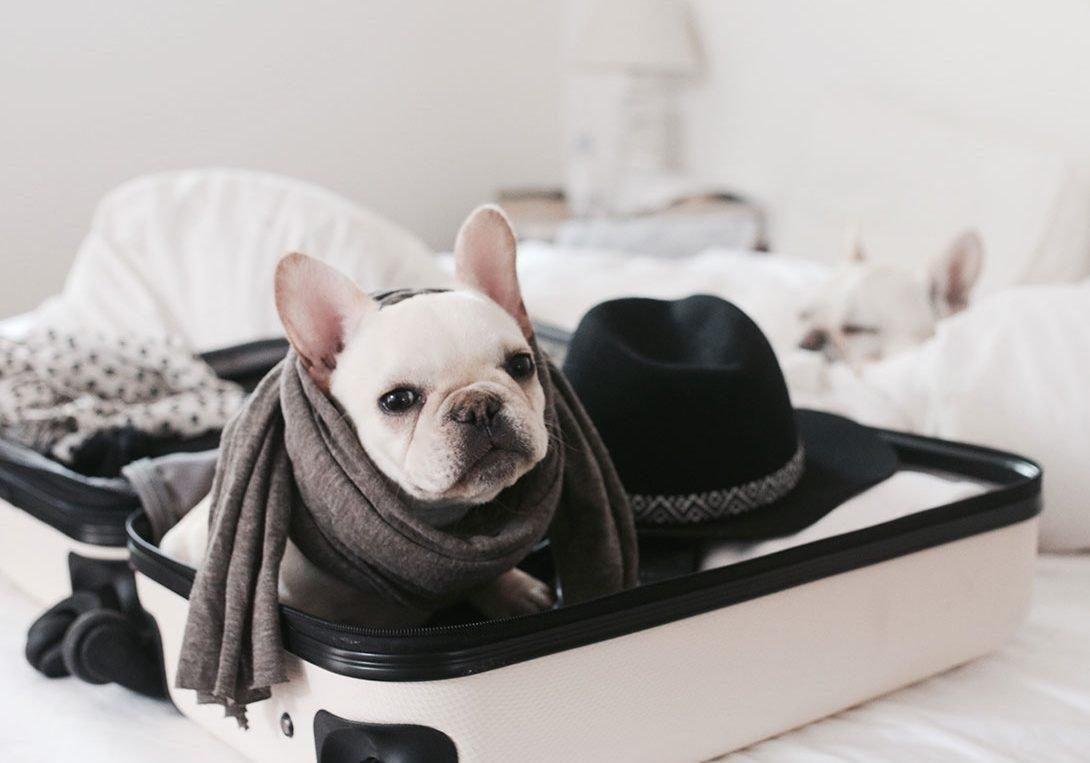 Pet-Friendly Hotels in Washington, D.C.